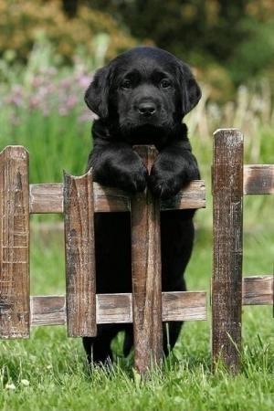Cute Doggy